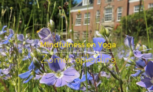 mindfulness en yoga zomer opleiding